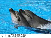 Купить «Два дельфина», эксклюзивное фото № 3995029, снято 24 июля 2012 г. (c) Алексей Гусев / Фотобанк Лори