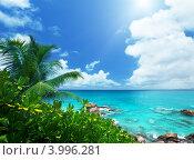 Купить «Зелёные тропические растения на морском берегу», фото № 3996281, снято 30 сентября 2012 г. (c) Iakov Kalinin / Фотобанк Лори