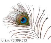 Купить «Павлинье перо», фото № 3999313, снято 6 ноября 2012 г. (c) Литова Наталья / Фотобанк Лори