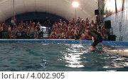 Купить «Дельфины катают на себе дрессировщика. Представление в дельфинарии.», эксклюзивный видеоролик № 4002905, снято 9 ноября 2012 г. (c) Юлия Машкова / Фотобанк Лори