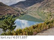 Купить «Виноградники в долине Дору, Португалия», фото № 4011697, снято 7 октября 2010 г. (c) Олег Селезнев / Фотобанк Лори