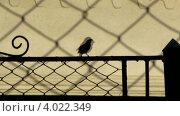 Силуэт птицы на фоне стены и теней. Стоковое видео, видеограф Yaroslav Bokotey / Фотобанк Лори