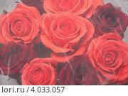 Купить «Фон из алых роз под белой вуалью», фото № 4033057, снято 19 ноября 2012 г. (c) Екатерина Панфилова / Фотобанк Лори