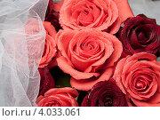 Купить «Фон из алых роз с белой вуалью», фото № 4033061, снято 19 ноября 2012 г. (c) Екатерина Панфилова / Фотобанк Лори