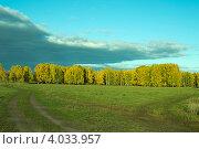 Дорога на опушке леса. Стоковое фото, фотограф Александр  Зубцов / Фотобанк Лори
