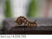 Купить «Замёрзшая волосатая гусеница на столбике веранды», фото № 4039741, снято 12 мая 2012 г. (c) Забалуев Игорь Анатолич / Фотобанк Лори