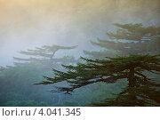 Заколдованный лес, фото № 4041345, снято 25 августа 2012 г. (c) Владимир Серебрянский / Фотобанк Лори