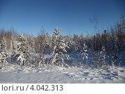 Купить «Осень. Югра. Западная Сибирь», эксклюзивное фото № 4042313, снято 4 ноября 2012 г. (c) Валерий Акулич / Фотобанк Лори