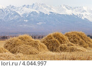 Сельский пейзаж со стожками на фоне гор. Стоковое фото, фотограф Виктория Катьянова / Фотобанк Лори
