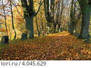 Купить «Старинная тенистая липовая аллея поздней осенью», фото № 4045629, снято 21 октября 2012 г. (c) Сергей Трофименко / Фотобанк Лори
