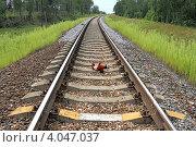 Купить «Железная дорога проходит через лес», эксклюзивное фото № 4047037, снято 28 июля 2012 г. (c) Юрий Шурчков / Фотобанк Лори