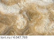 Купить «Соленая земля, берег озера Баскунчак летом», фото № 4047769, снято 3 мая 2011 г. (c) Надежда Болотина / Фотобанк Лори