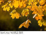 Золотая осень. Стоковое фото, фотограф Лукманов Виталий / Фотобанк Лори