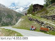 Купить «Семья туристов отдыхает на лавочке во время прогулки по Швейцарским Альпам в летний день», фото № 4053089, снято 7 июня 2012 г. (c) Юрий Брыкайло / Фотобанк Лори