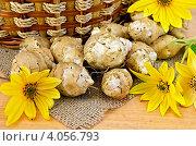 Купить «Топинамбур с желтыми цветами и корзиной», фото № 4056793, снято 14 сентября 2012 г. (c) Резеда Костылева / Фотобанк Лори