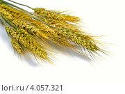 Купить «Колосья пшеницы на белом фоне», фото № 4057321, снято 9 июня 2010 г. (c) Оксана Ковач / Фотобанк Лори