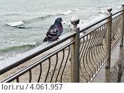 Купить «Нелётная погода. Мокрый голубь сидит на перилах», фото № 4061957, снято 31 октября 2012 г. (c) Сергей Трофименко / Фотобанк Лори