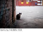 Бездомный. Стоковое фото, фотограф Виноградова Елена / Фотобанк Лори