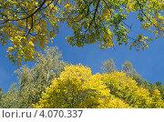 Купить «Осенний пейзаж с жёлтыми листьями», эксклюзивное фото № 4070337, снято 14 сентября 2012 г. (c) Елена Коромыслова / Фотобанк Лори