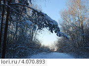Купить «Дорога из зимнего леса», фото № 4070893, снято 17 января 2008 г. (c) Анна Омельченко / Фотобанк Лори