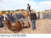 Экскурсовод показывает туристам как правильно сидеть верхом на верблюде. Douz, Tunisia (2012 год). Редакционное фото, фотограф Кекяляйнен Андрей / Фотобанк Лори