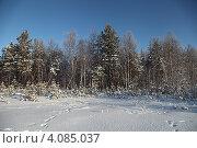 Зимой в лесу. Югра. Западная Сибирь (2012 год). Редакционное фото, фотограф Валерий Акулич / Фотобанк Лори