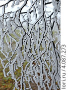 Купить «Обледенелые ветки дерева», фото № 4087273, снято 18 ноября 2012 г. (c) Эдуард Кислинский / Фотобанк Лори