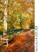 Купить «Скамейка в осеннем парке», фото № 4107705, снято 2 ноября 2012 г. (c) Дмитрий Наумов / Фотобанк Лори