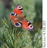 Бабочка Монарх. Стоковое фото, фотограф Жанна Каштан / Фотобанк Лори