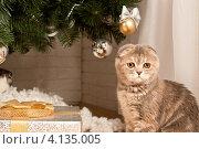 Кошка. Стоковое фото, фотограф Конушкина Екатерина / Фотобанк Лори