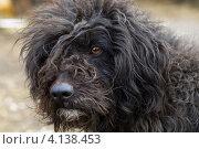 Купить «Портрет бездомной лохматой собаки», эксклюзивное фото № 4138453, снято 20 сентября 2019 г. (c) Игорь Низов / Фотобанк Лори