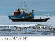 Купить «Рыболовецкие лодки на якоре в море. Остров Итуруп», фото № 4139341, снято 21 августа 2012 г. (c) Владимир Серебрянский / Фотобанк Лори