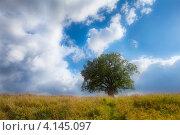 Старый дуб в поле на фоне неба. Стоковое фото, фотограф Кравченко Юлия / Фотобанк Лори