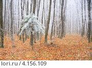 Купить «Первый снег в осеннем парке», фото № 4156109, снято 18 ноября 2012 г. (c) Эдуард Кислинский / Фотобанк Лори