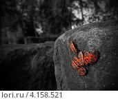 Пожарники. Стоковое фото, фотограф Алексей Алексеев / Фотобанк Лори