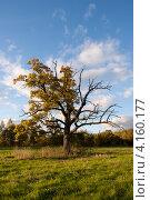 Одинокое дерево в поле на фоне неба. Стоковое фото, фотограф Каменева Лариса / Фотобанк Лори