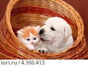 Котенок со щенком. Стоковое фото, фотограф Ирина Подгорных / Фотобанк Лори