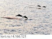 Дельфины. Стоковое фото, фотограф Григорий Барам / Фотобанк Лори