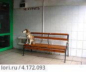 Купить «Собака сидит на лавочке, ждет хозяина из магазина», эксклюзивное фото № 4172093, снято 1 сентября 2009 г. (c) lana1501 / Фотобанк Лори