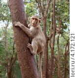 Обезьяна сидит на стволе дерева. Стоковое фото, фотограф Алексей Кокоулин / Фотобанк Лори