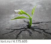 Купить «Зеленый росток пробивается сквозь асфальт», фото № 4175605, снято 2 ноября 2012 г. (c) EugeneSergeev / Фотобанк Лори