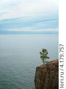 Байкал. Сосна на утесе. Стоковое фото, фотограф Григорий Барам / Фотобанк Лори
