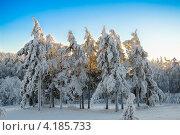 Зимние ели. Стоковое фото, фотограф Николай Бирюков / Фотобанк Лори