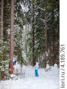 Лыжница в сосновом лесу катается на лыжах. Стоковое фото, фотограф Кекяляйнен Андрей / Фотобанк Лори