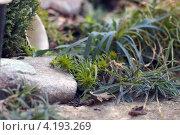 Альпийская горка. Стоковое фото, фотограф Ольга Прокопова / Фотобанк Лори