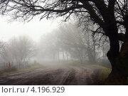 Дорога в тумане. Стоковое фото, фотограф Николай Комаровский / Фотобанк Лори