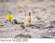 Купить «Цветы в каменной пустыне», фото № 4203305, снято 2 октября 2012 г. (c) Анна Мартынова / Фотобанк Лори