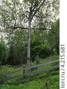 Купить «Соловки. Береза в виде креста на острове Анзер.», фото № 4215681, снято 14 июля 2012 г. (c) Igor Lijashkov / Фотобанк Лори