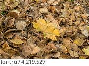 Желтый лист. Стоковое фото, фотограф Татьяна Фролова / Фотобанк Лори