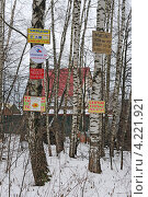 Купить «Объявления и реклама на деревьях», эксклюзивное фото № 4221921, снято 4 января 2013 г. (c) Юрий Морозов / Фотобанк Лори